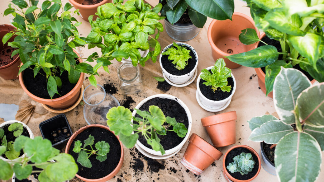Top reasons why you need to grow your own fruit and vegetables